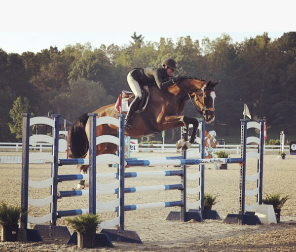 Boeve's Onedin - Oldenburg mare. Boeve's Onedin 13 year old Oldenburg mare. Show record up to 1.40. Competitive child/adult jumper.